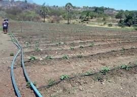 Nazarezinho familias mudam de vida cultivando hortaliças 3 270x191 - Governo do Estado incentiva agricultura familiar em Nazarezinho