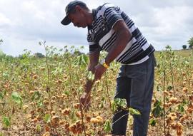 governo pb incentiva agricultura familiar do algodao portal 1 270x191 - Retomada da cultura do algodão pelo Governo do Estado anima agricultores familiares