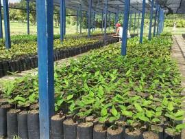 mudas emepa5 270x202 - Governo entrega mudas de plantas frutíferas para agricultores familiares