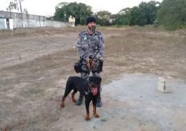 seap passa a contar com acoes com caes treinados nas penitenciarias 2 270x191 - Sistema prisional passa a utilizar cães nas operações de segurança
