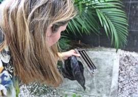 ses unidades de saude realizam novo dia de faxina contra o aedes aegypti foto ricardo puppe 3 270x191 - Unidades de saúde realizam mais um Dia de Faxina contra o mosquito Aedes aegypti