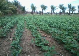 Irrigação Micro Aspersão poço amazonas 18 02 2016 270x192 - Governo apoia ampliação de produção agrícola para atender PNAE e PAA no Estado