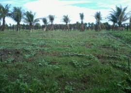 Irrigação p Micro aspersão 18 02 2016 270x192 - Governo apoia ampliação de produção agrícola para atender PNAE e PAA no Estado