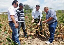 emater pb governo distribui sementes do algodao organico 2 270x191 - Governo do Estado começa distribuição de sementes de algodão orgânico na região do Curimataú