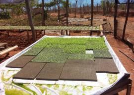29 03 16 emater estimula hidroponia cultivo hortalias 4 270x192 - Governo do Estado incentiva cultivo de hortaliças com hidroponia