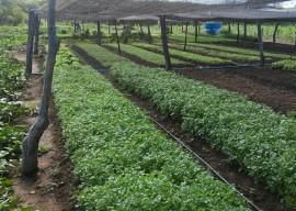 30 03 16 uso racional agua garante produtos horta liaspor 1 270x192 - Uso racional de água garante produção de hortaliças no Sertão