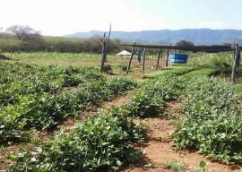 30 03 16 uso racional agua garante produtos horta liaspor 3 270x192 - Uso racional de água garante produção de hortaliças no Sertão