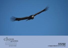 condor2 270x192 - Até sexta-feira: Espaço Cultural recebe exposição El Condor de Los Andes