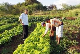 emater producao de hortalicas em uirauna 2 270x183 - Produção de hortaliças incentiva agricultura familiar em Uiraúna