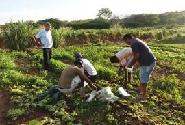 emater producao de hortalicas em uirauna 3 270x183 - Produção de hortaliças incentiva agricultura familiar em Uiraúna