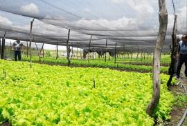 emater producao de hortalicas em uirauna 4 270x183 - Produção de hortaliças incentiva agricultura familiar em Uiraúna
