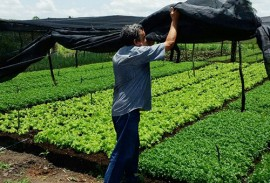 emater producao de hortalicas em uirauna 5 270x183 - Produção de hortaliças incentiva agricultura familiar em Uiraúna