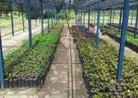 mudas emepa2 270x192 - Governo do Estado distribui mudas frutíferas com agricultores do Ecoprodutivo