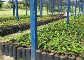 mudas emepa5 270x192 - Governo do Estado distribui mudas frutíferas com agricultores do Ecoprodutivo