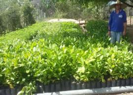 mudas6 270x192 - Governo do Estado distribui mudas frutíferas com agricultores do Ecoprodutivo