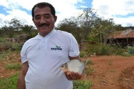 pis5421 270x180 - Empasa comercializa peixe a preços populares em Itaporanga para Semana Santa