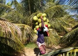 06 04 16 agricultores sao orientados uso racional deguapar 4 270x192 - Agricultores cultivam coco com uso racional de água em Sousa