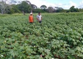 emater projeto algodao colorido pb evento internacional em goiania go 5 270x191 - Projeto Algodão Paraíba será apresentado em evento internacional em Goiânia