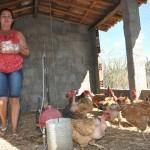 mulher-produçao-ovos-sume_portal