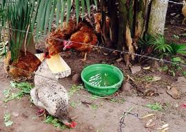 rio tinto2 270x192 - Governo do Estado e MDA contemplam mulheres rurais com projetos produtivos em Rio Tinto
