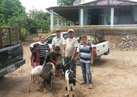 caprinos Oziel11 053 270x192 - Agricultores do Ecoprodutivo recebem matrizes e reprodutores de caprinos do Governo do Estado