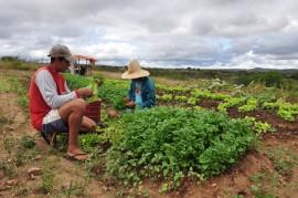 DSC 0822a 270x179 - Projeto Ecoprodutivo contempla famílias com mudas frutíferas no Sertão paraibano
