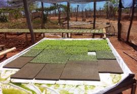 Hidropónia Matureia2 270x185 - Emater-PB orienta agricultor que usa hidroponia para produzir hortaliça e aumentar renda