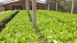 Hidroponia Matureia 270x151 - Emater-PB orienta agricultor que usa hidroponia para produzir hortaliça e aumentar renda
