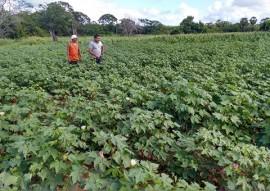 algodao colotido 1 270x191 - Instituto C&A conhece Projeto Algodão Paraíba e seu processo de produção