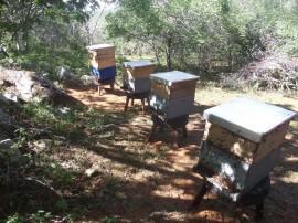 apicultura emepa2 23 07 270x202 - Governo do Estado investe na ampliação da apicultura na região do Cariri