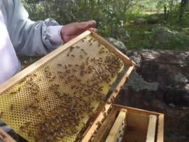 Governo do Estado investe na ampliação da apicultura na região do Cariri