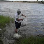 pis359 150x150 - Governo da Paraíba realiza peixamento em reservatórios d'água do estado