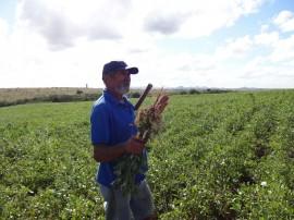 amendoim 21 07 270x202 - Agricultores do Agreste paraibano iniciam colheita de amendoim