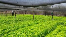 Hortaliças0 30 08 270x152 - Governo incentiva agricultura familiar em Vieirópolis