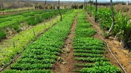 Hortalicas 30 08 270x152 - Governo incentiva agricultura familiar em Vieirópolis