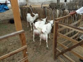 cubati2 29 08 270x202 - Governo apoia exposição e feira de caprinos e ovinos em Cubati
