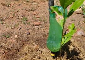 emater estimula pequena irrigacao com uso de garrafas pet 2 270x191 - Emater estimula pequena irrigação com utilização de garrafa pet