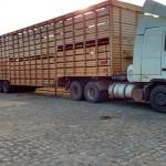 gado-alagoinha-26-08