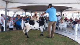 leilão emepa2 29 08 270x152 - Rebanho de caprinos e ovinos do Nordeste se fortalece com genética da Emepa