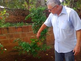 pimenta alagoa grande 12 08 2016 270x202 - Cultivo de pimenta surge como alternativa econômica para agricultor familiar