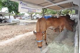 DSC 0448 270x179 - Emepa promove leilão de gado Guzerá, Gir e Sindi neste sábado na Expofeira