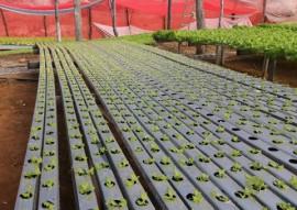 emater agricultura familiar na expofeira paraiba agronegocio 1 270x191 - Gestão Unificada demonstra as principais ações da agricultura familiar na Expofeira Paraíba Agronegócios