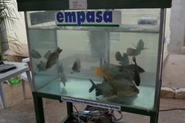 pis625 270x180 - Empasa integra programação da Feira Paraíba Agronegócios