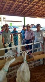 coxixola3 151x270 - Criadores de Coxixola realizam exposição e feira de caprinos