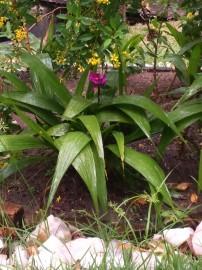 DSC 0529 e1479132950854 202x270 - No Jardim Botânico: Sudema abre inscrições para oficina de mini jardins