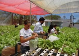 governo inaugura desalinizador em picui 5 270x191 - Zona rural de Picuí ganha unidade de cultivo hidropônico de hortaliças com água dessalinizada