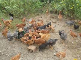 Cajazeirinha 09 02 145 270x202 - Estiagem leva agricultor de Cajazeirinhas a optar por avicultura com orientação da Emater