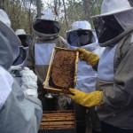 apicultura emepa1