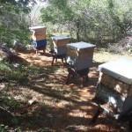 apicultura emepa2 17-02
