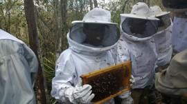 apicultura emepa3 270x151 - Emepa e Bombeiros vão atuar juntos na captura de enxames de abelhas